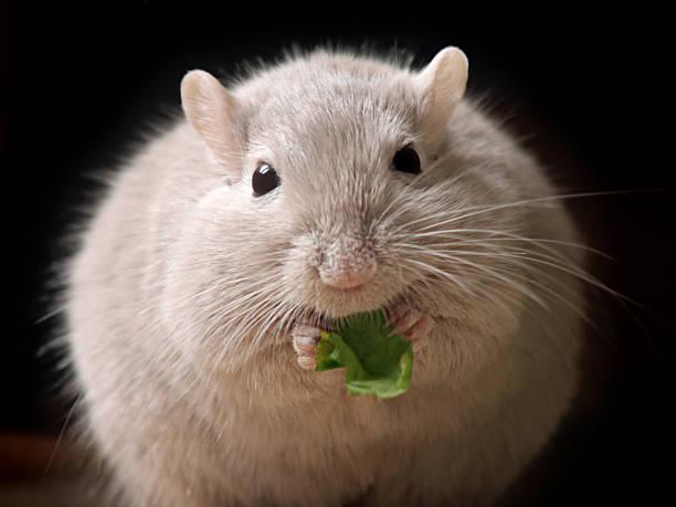 Flauschige Maus ball – Foto