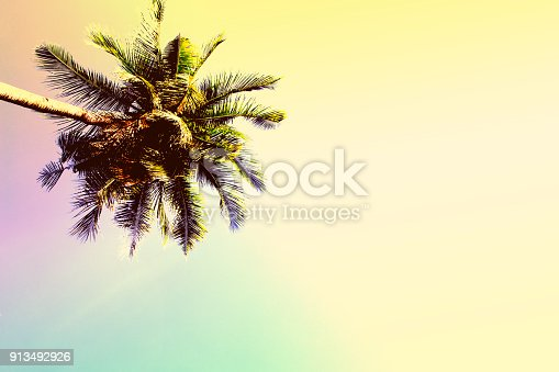 istock Fluffy palm tree crown on sunny blue sky background. Vintage yellow toned photo. 913492926