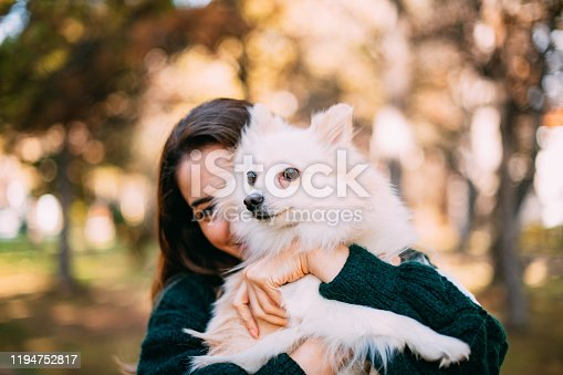 Fluffy Pomeranian Fox and Owner