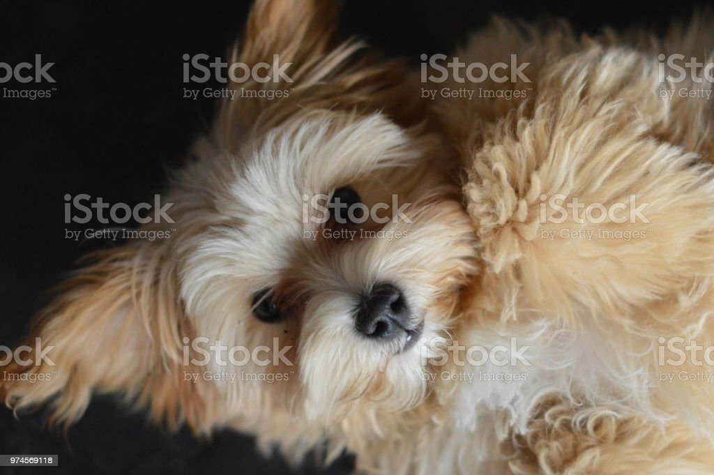 Fluffy puppy stock photo