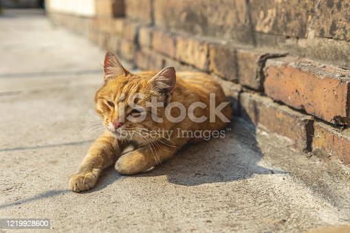 Fluffy red cat street cat sleeps relaxed on the sidewalk. Clear weather, the animal enjoys. Shallow depths of the field