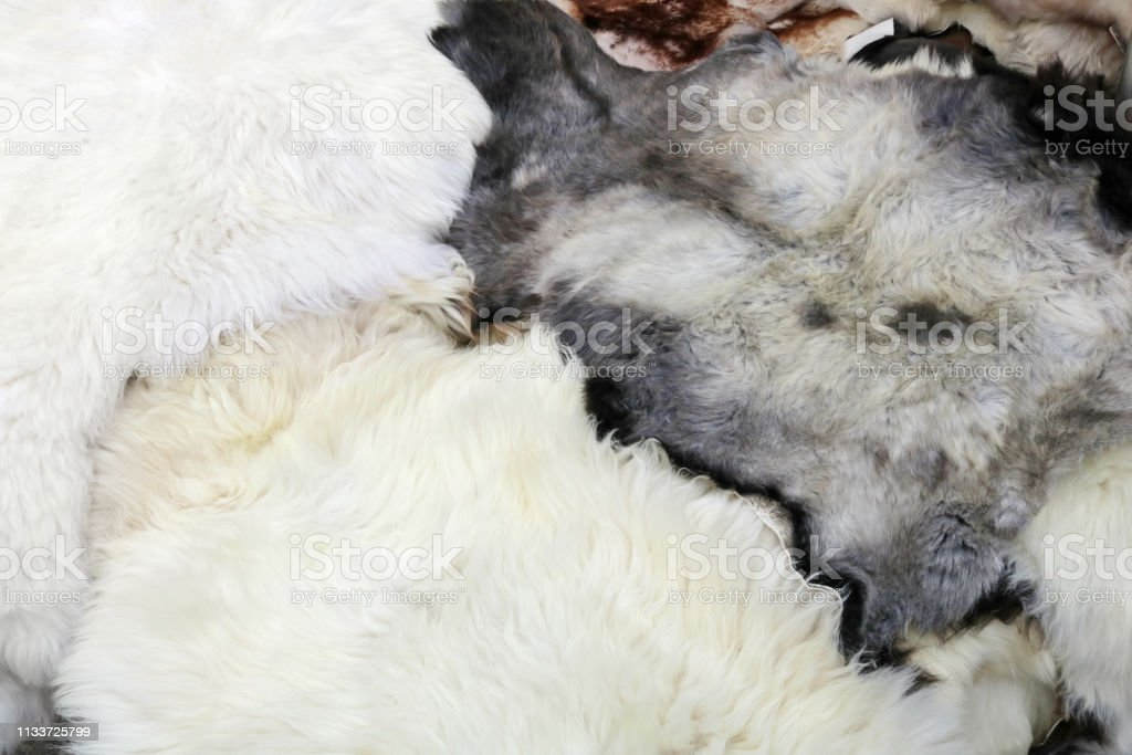 Fluffy sheep skins with soft white and cured fur are processed...