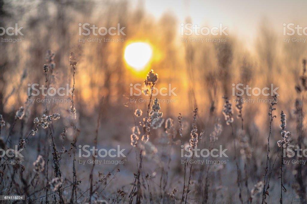 Fluffy sunset royalty-free stock photo