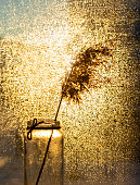 glass vase with dry fluffy twig of pampas grass or common reed in gold bright bokeh light. Abstract background, minimalism, floral home interior