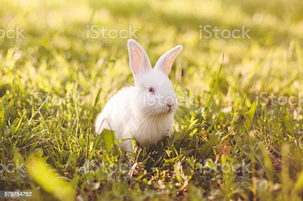 Fluffy white baby bunny picture id579754752?b=1&k=6&m=579754752&s=612x612&h=jccxfoc02jlimm0atj2dy5fgvky20wwy0nyfn fgcdu=