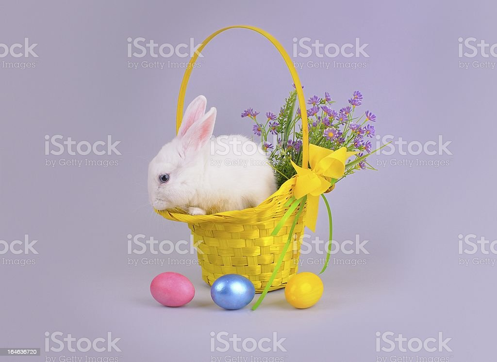 Fluffy white bunny in a basket, flowers and Easter eggs royalty-free stock photo