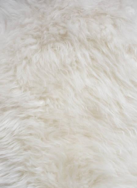 flauschige weiße schaffell hintergrundtextur - lammfell stock-fotos und bilder