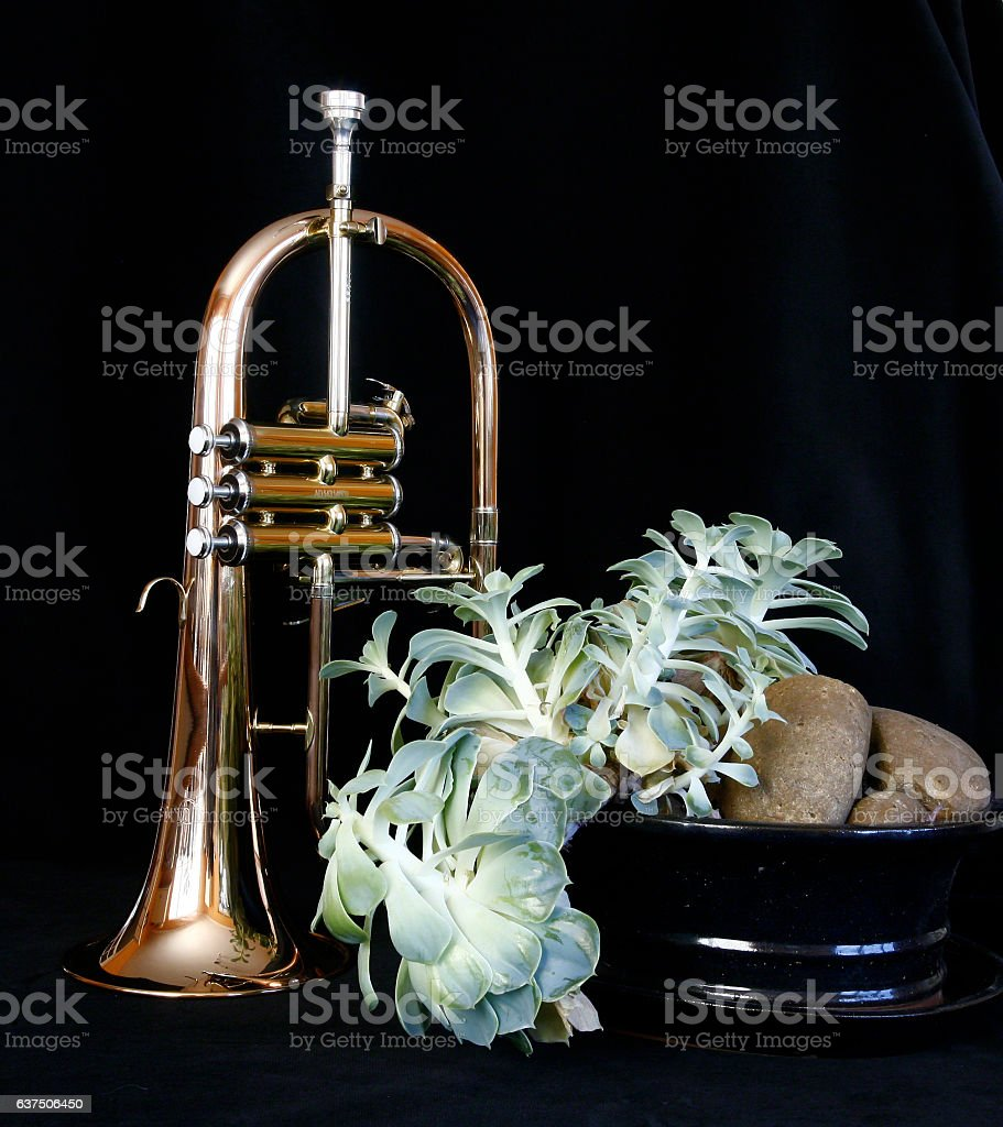 Flugel horn with succulent stock photo