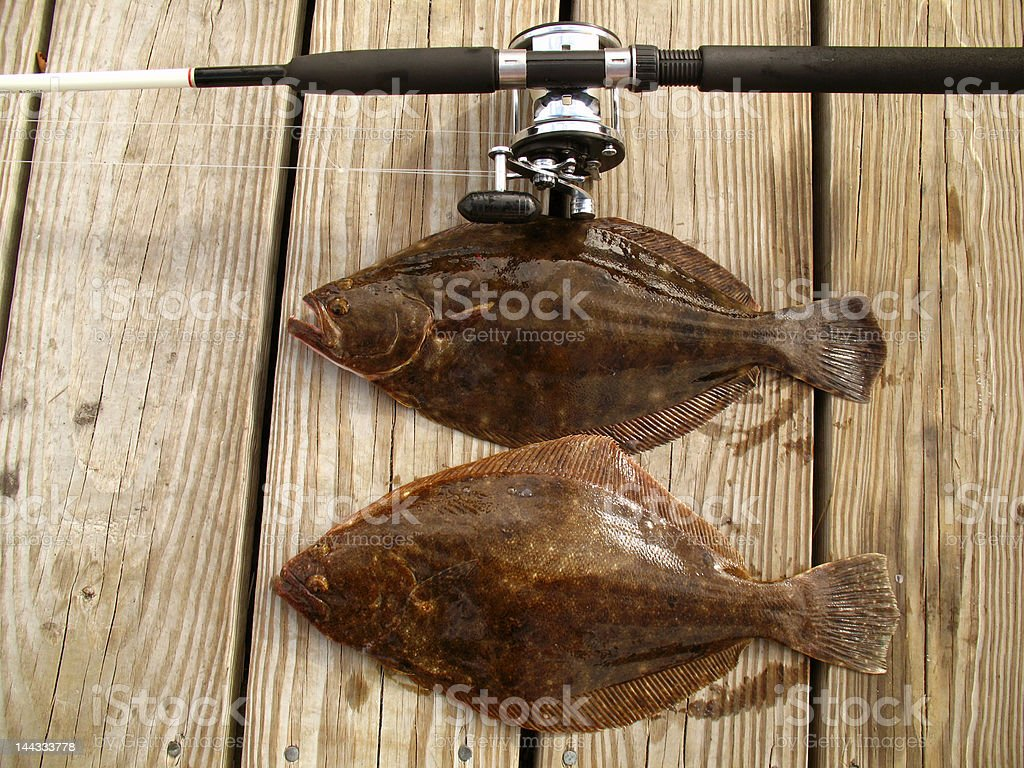 Fluke Catch royalty-free stock photo