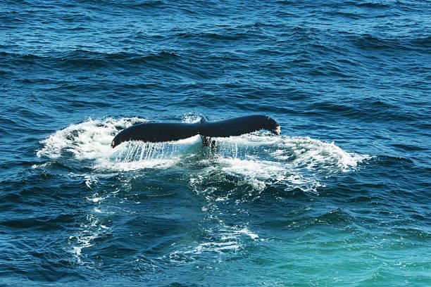 Fluke vom Wal – Foto
