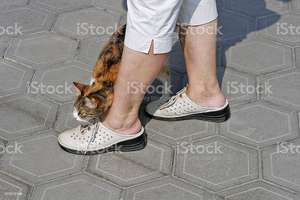 Flunkey Cat royalty-free stock photo