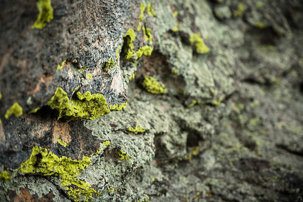 Fluorescent green lichen on granite rock face. stock photo