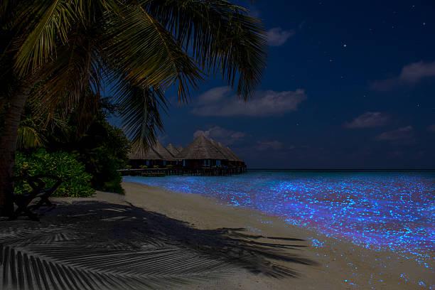Fluorescent plankton in the Maldives - Indian Ocean - Photo