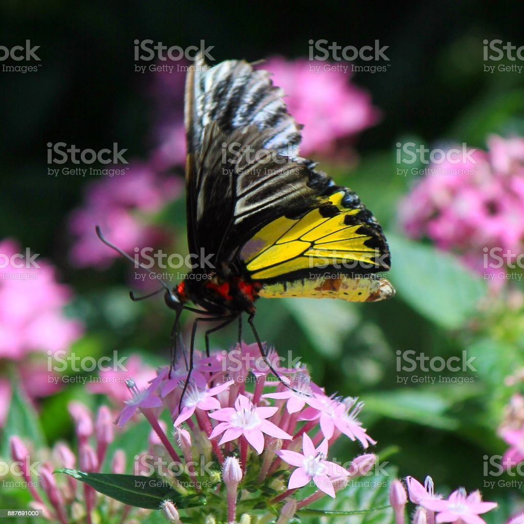Flutter Mode Stock Photo - Download Image Now