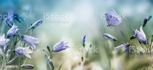 Fluttering butterfly over lilac bellflowers background picture id1162960413?b=1&k=6&m=1162960413&s=612x612&h=zsw bdpg h8a1qiggkhmnlqm5gbd2jjvme9niebgq88=