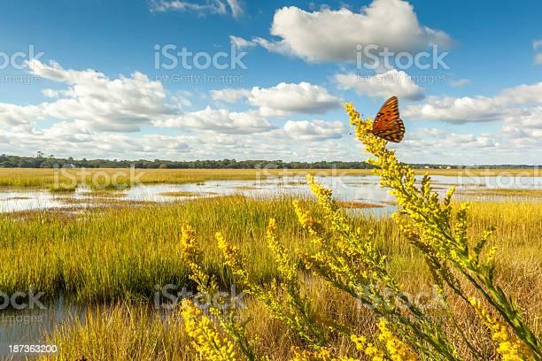 Photo of Fluttering Marsh Butterfly