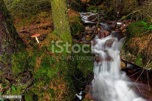 Fly Agaric Mushroom by a forest path