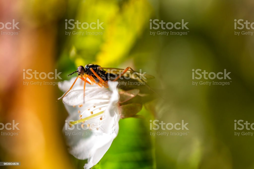 Fly an a flower - Royalty-free Animal Stock Photo
