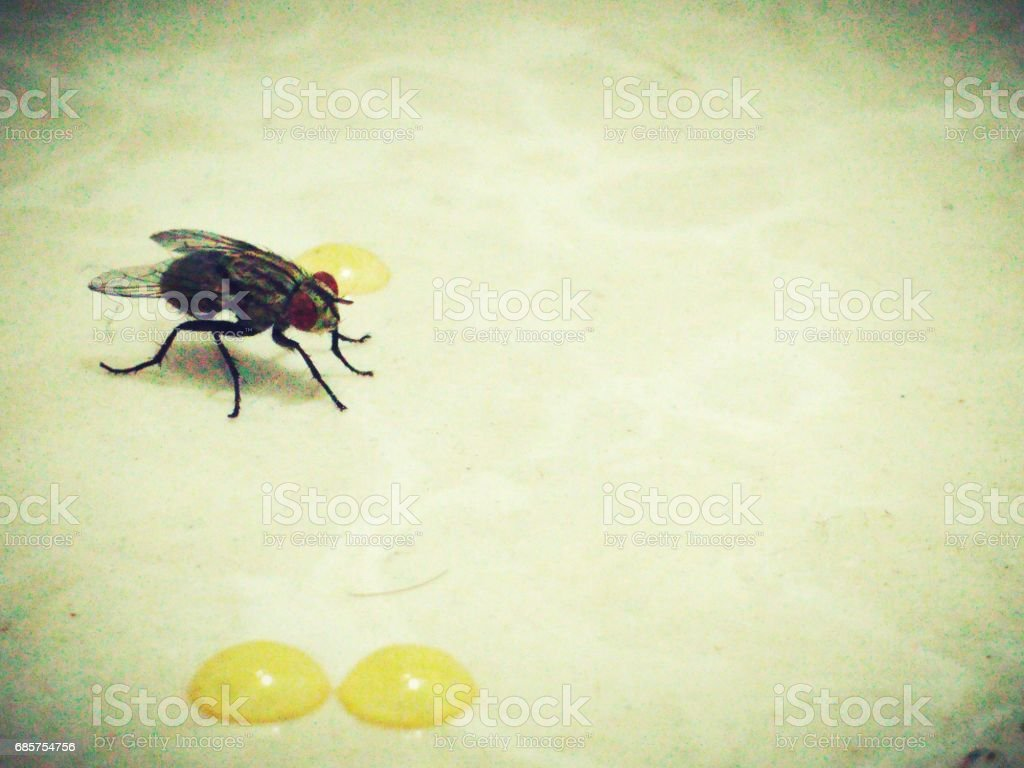 Fly annd honey foto stock royalty-free
