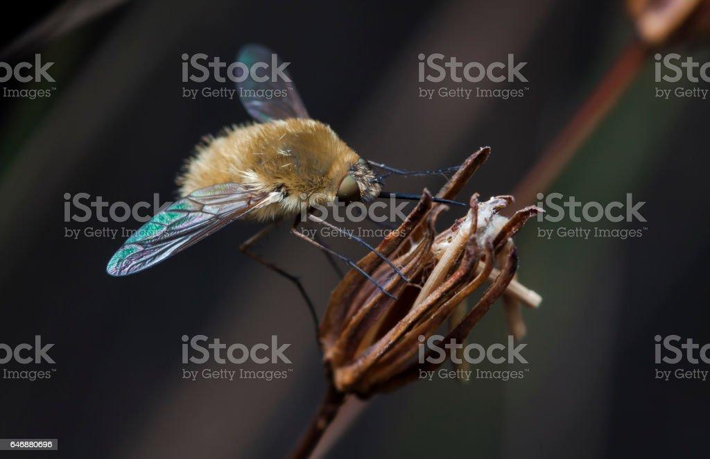 fly buzzed stock photo