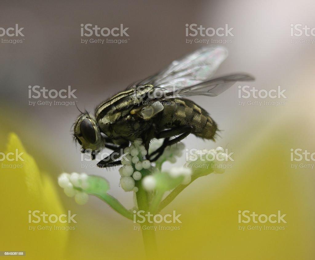 fly close up Lizenzfreies stock-foto