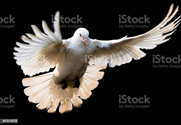 Fly dove with clipping path picture id94343929?b=1&k=6&m=94343929&s=612x612&h=a3gxoobqqv wlbqbokcgb yv8utb6zuokpqqvdkt9sq=