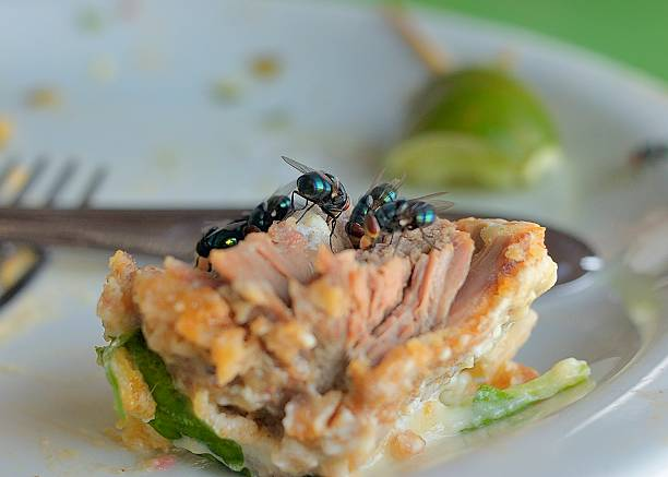 mosca banquete no brasil - desperdício alimentar imagens e fotografias de stock