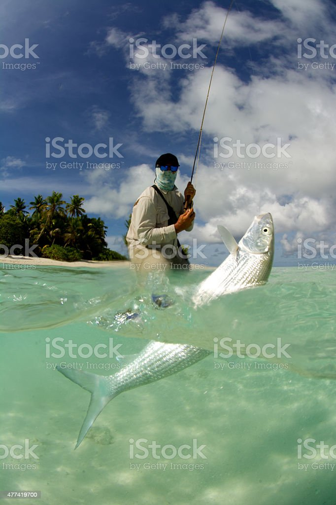 fly fisherman catching a bonefish stock photo