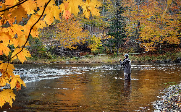 Fly fisherman on the Margaree River, Cape Breton, Nova Scotia A fly fisherman spey casting for Atlantic Salmon on the Margaree River in the fall. freshwater fishing stock pictures, royalty-free photos & images