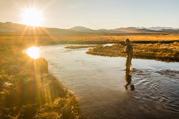 Fly Fisherman On The River Casting Fly Fisherman On The River Casting fly fishing stock pictures, royalty-free photos & images
