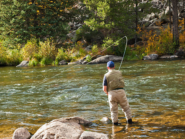 Fly Fisherman Fly fisherman at Taylor River, Colorado. casting stock pictures, royalty-free photos & images