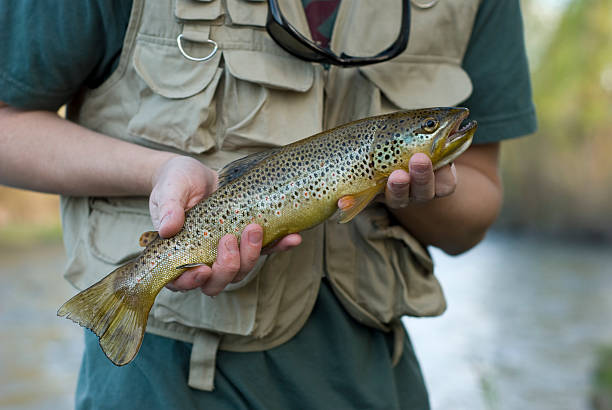 fly fisherman with fresh trout stock photo