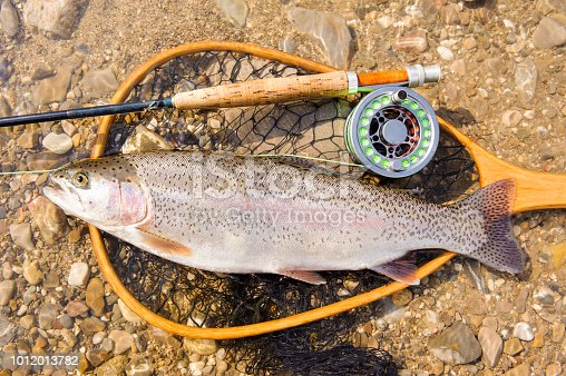 istock fly fishing and rainbow trout 1012013782