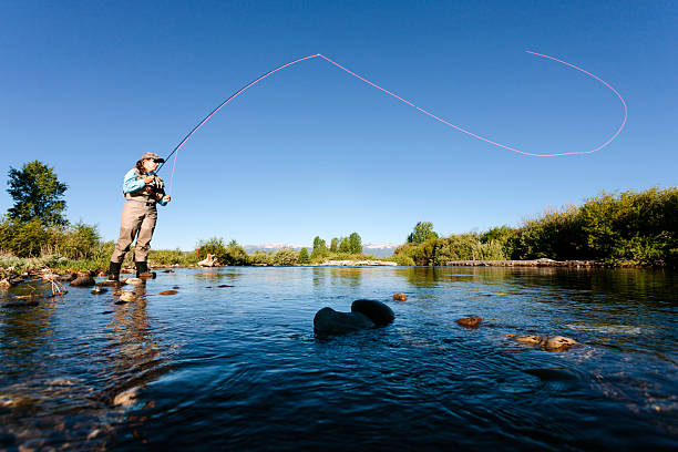 Fly fishing, casting stock photo