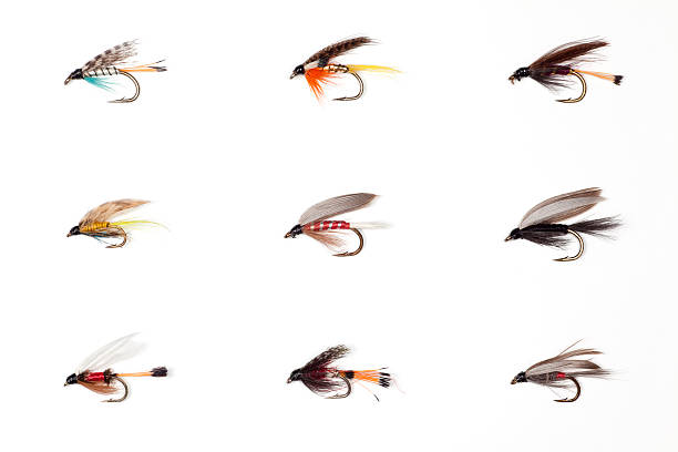 Fly Fishing - Dry Flies Macro image of a selection of fly fishing dry flies. fishing hook stock pictures, royalty-free photos & images
