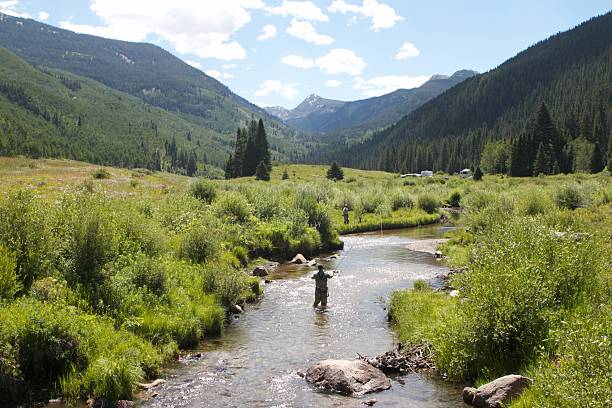 Fly Fishing in a Stream Fly fisherman in a stream in Colorado. fly fishing stock pictures, royalty-free photos & images