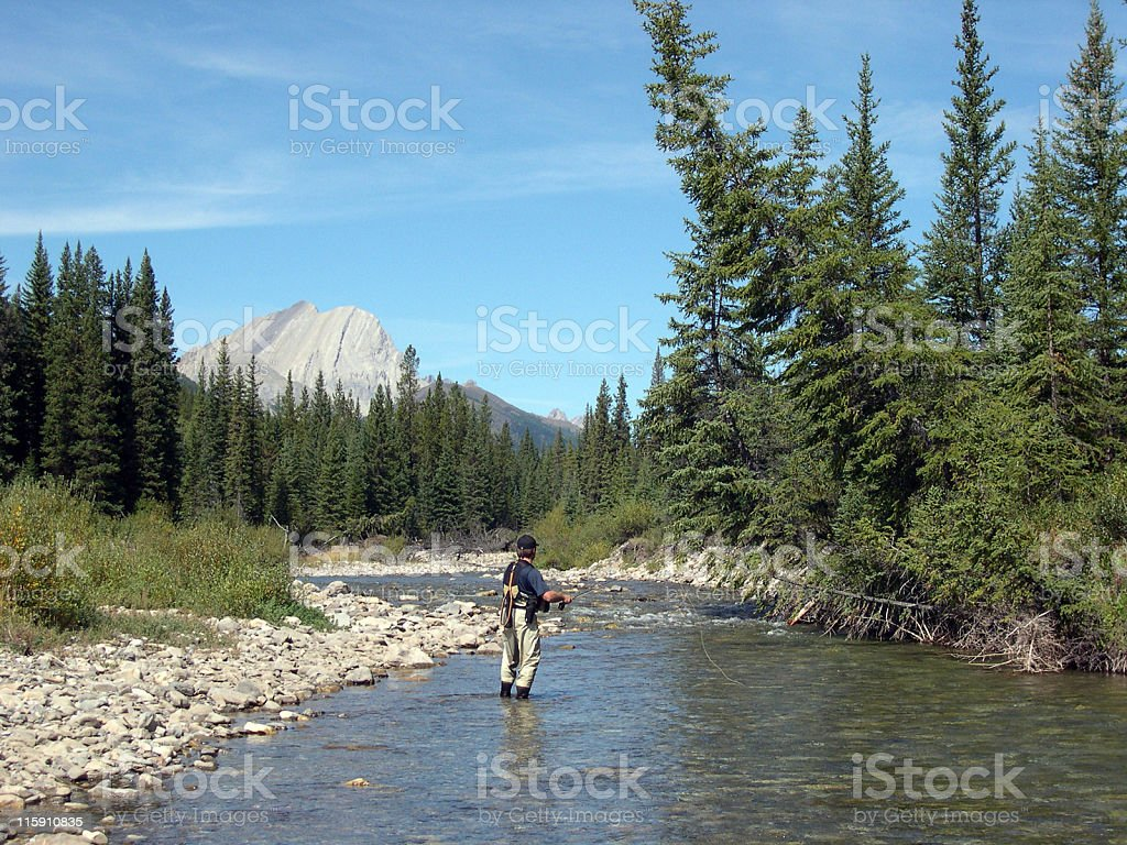 Fly Fishing in the Rockies royalty-free stock photo
