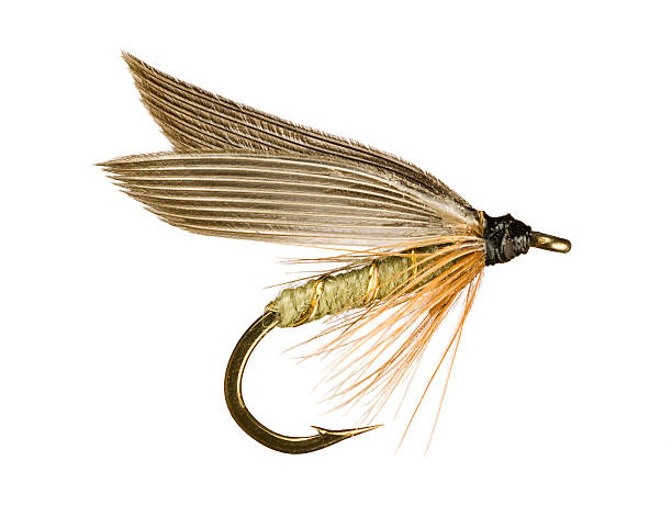 Fly Fishing Lure Grey Winged Olive Wet Trout Fishing Fly Lure Isolated on White Background fishing hook stock pictures, royalty-free photos & images