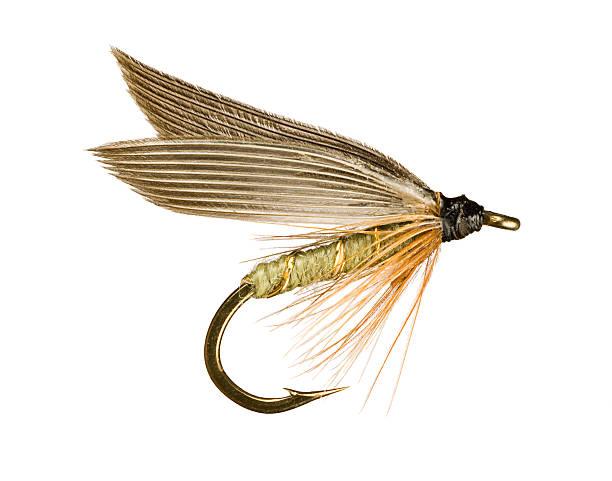 appât de pêche à la mouche - imitant un animal photos et images de collection