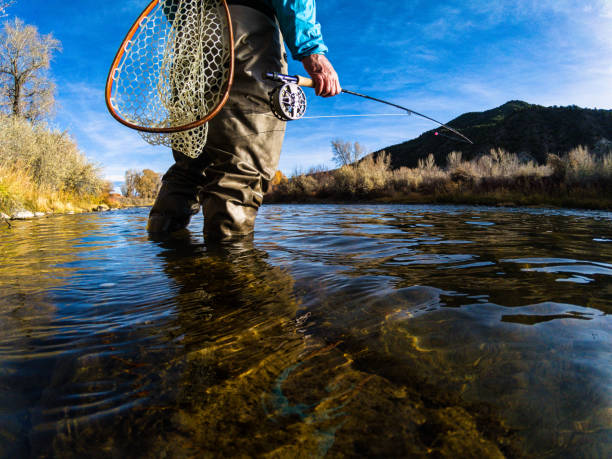Fly Fishing on Scenic River Fly Fishing on Scenic River - Environmental portrait of Fly Fisherman on sunny fall autumn day catching trout. casting stock pictures, royalty-free photos & images