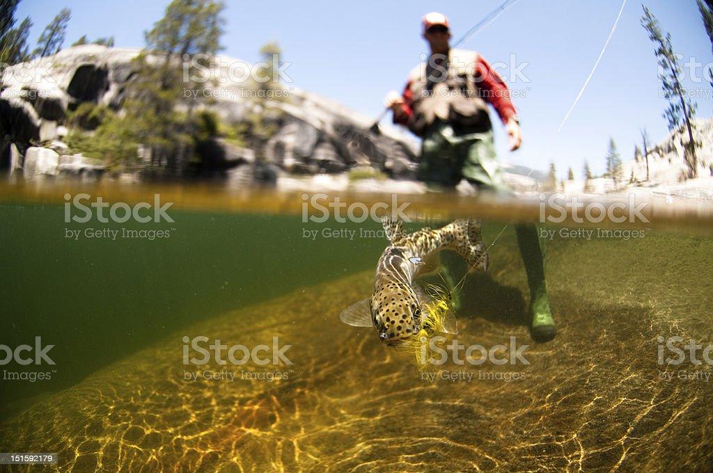 Fliegenfischen – Foto