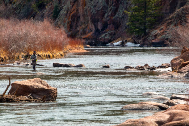 Fly fishing the Platte in the Colorado Rockies stock photo