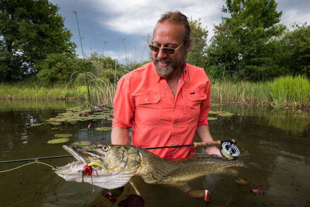 Fly fishing with success - big pike catched stock photo