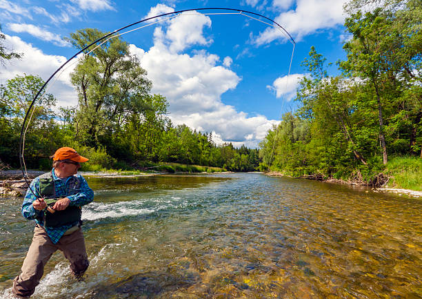 Fly fishing with success A fisherman is flyfishing in a beautiful River  on a perfekt Day. freshwater fishing stock pictures, royalty-free photos & images