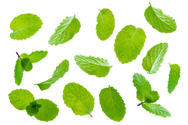Fly fresh raw mint leaves isolated on white background stock photo