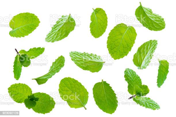 Photo of Fly fresh raw mint leaves isolated on white background