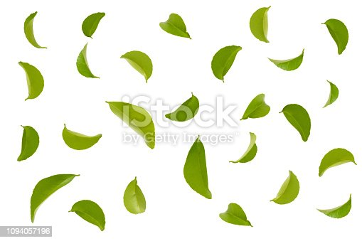 fly green leaves isolated on white