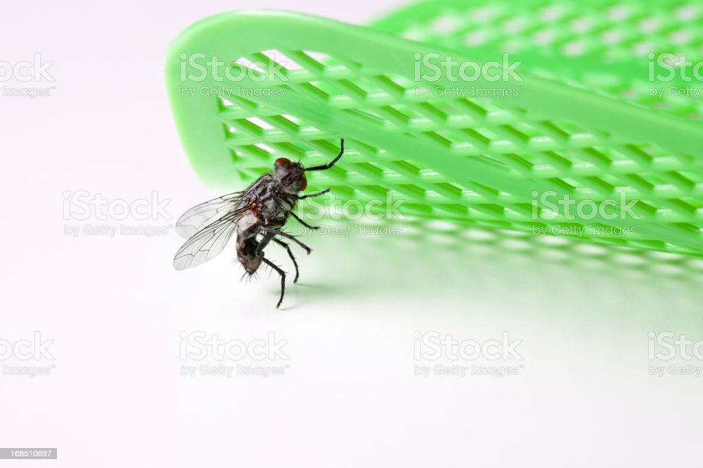 Fly Holds up Swatter stock photo