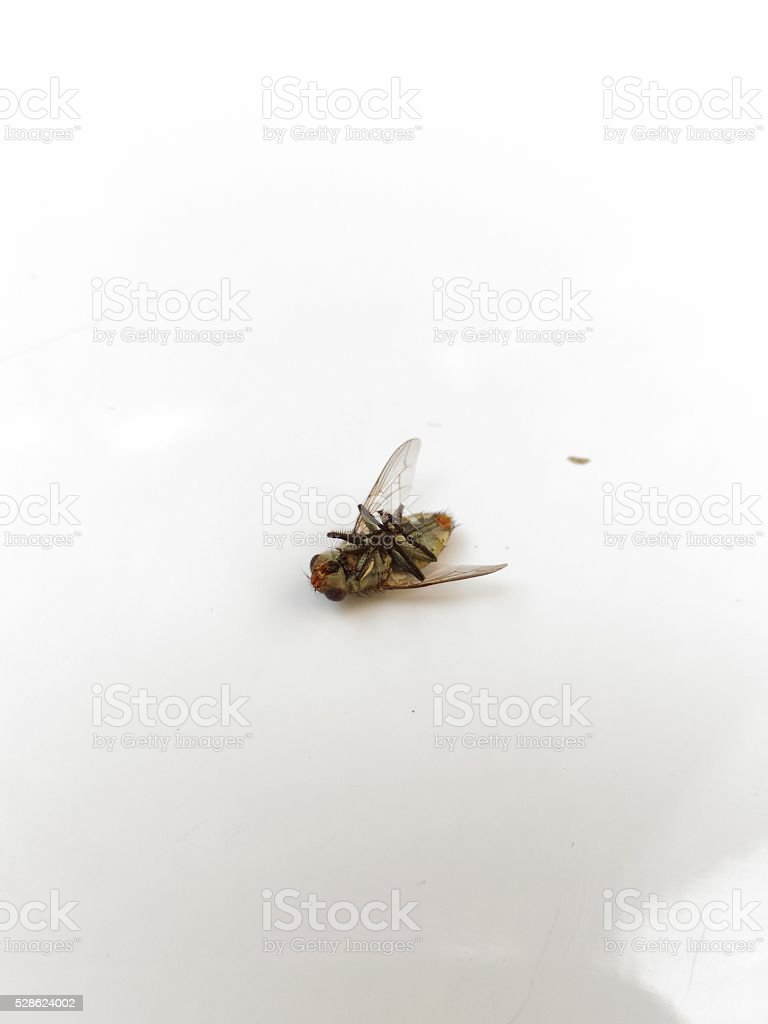 fly impermanent stock photo