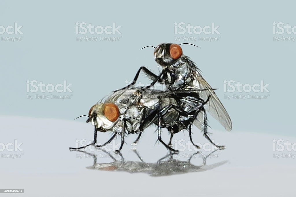 Fly in love concept. royalty-free stock photo